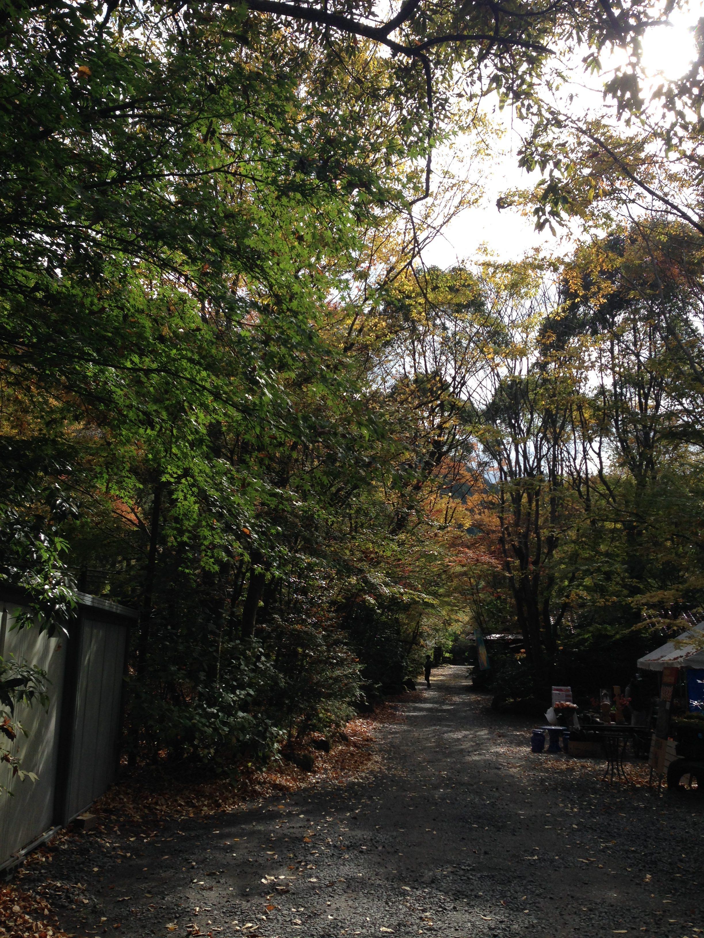 【日田 琴ひら温泉】秋のお出かけはやっぱり温泉と紅葉のセットが大好きっ。